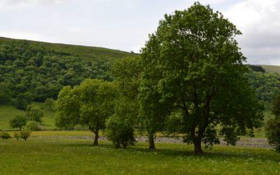 Landscape Ecological Management Plan (LEMP)