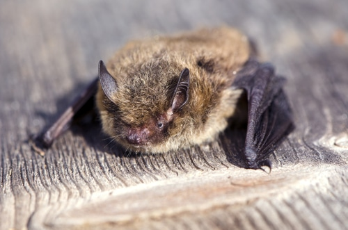 Undertaking a Bat Hibernation Survey