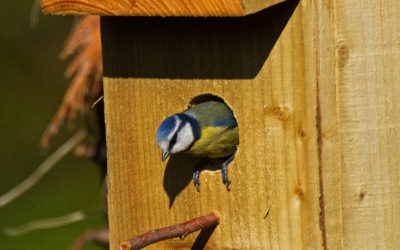 Bird Surveys for Development