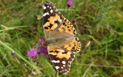 Collington Winter Environmental: A Leading Ecology Company