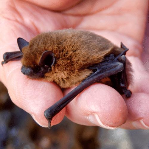 bat survey manchester