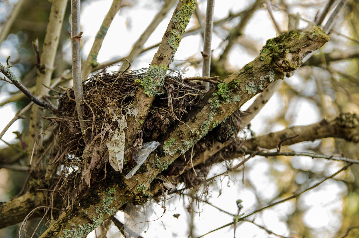 nesting bird survey