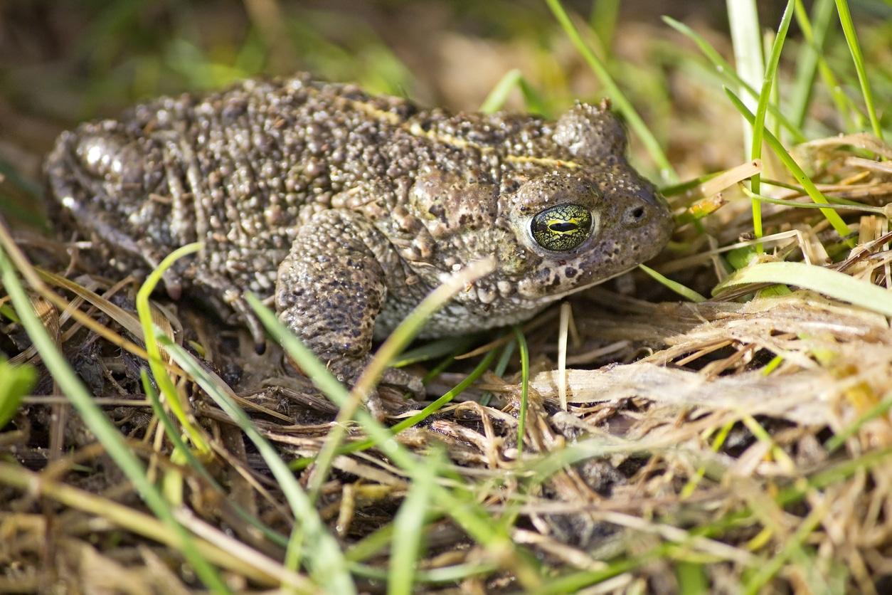 amphibian survey