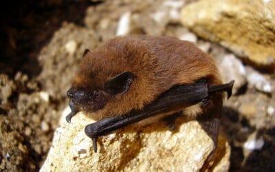 Bat Building Surveys: Protected Species Surveys