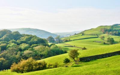 PEA Survey: Preliminary Ecological Appraisal